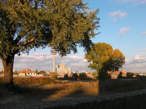 Zwei der alten Bäume, die gefällt wurden.
