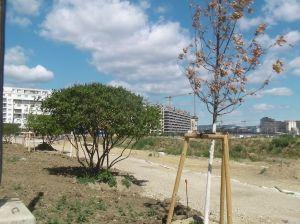 ) Die Bepflanzung entlang des südlichen Randes. Einer von den zwei toten Bäumen ist im Vordergrund zu sehen.